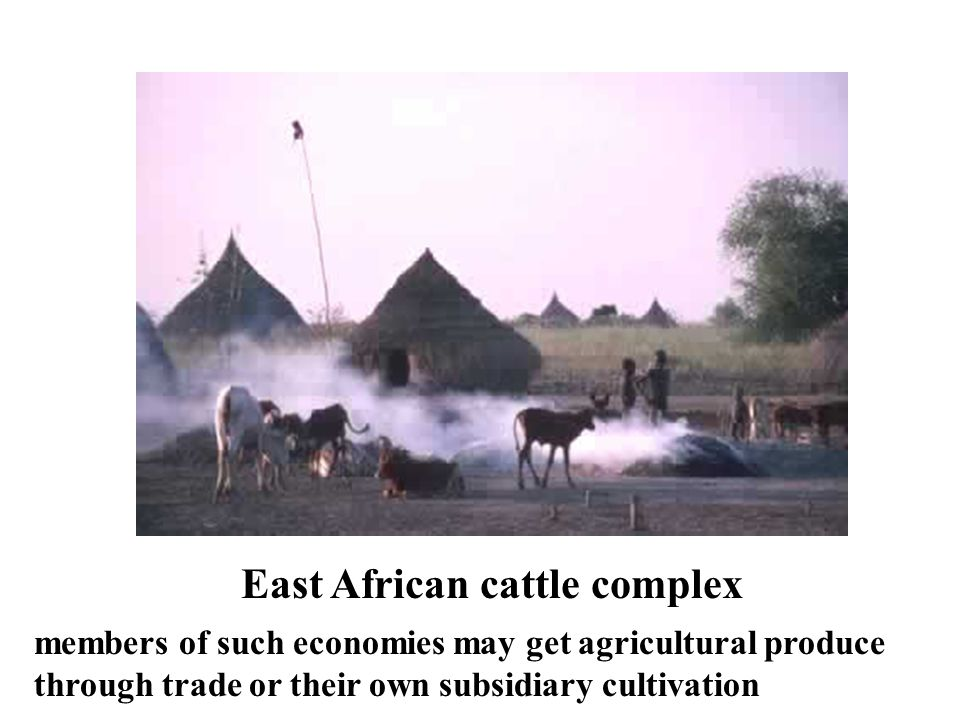 East African cattle complex