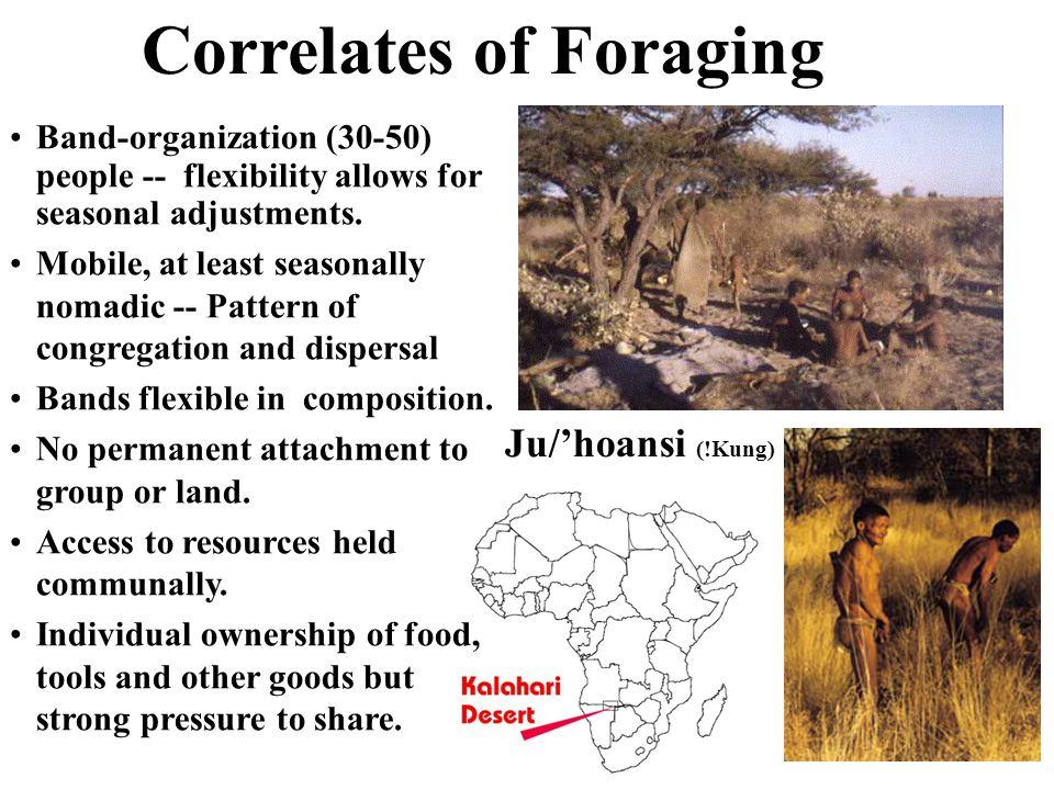 Correlates of Foraging