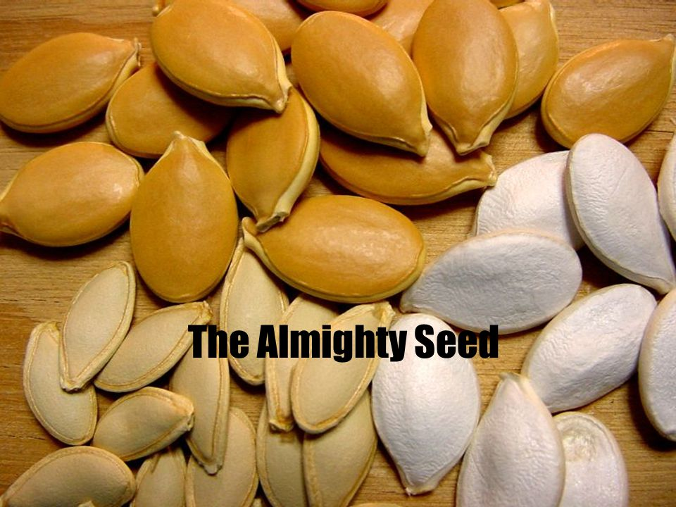 The Almighty Seed