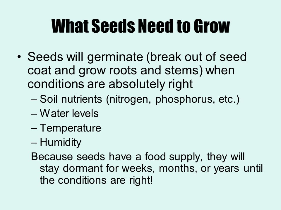 What Seeds Need to Grow Seeds will germinate (break out of seed coat and grow roots and stems) when conditions are absolutely right.