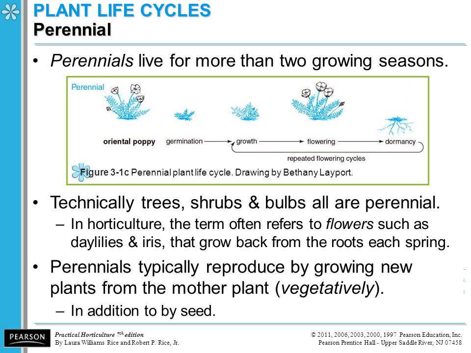 PLANT LIFE CYCLES Perennial