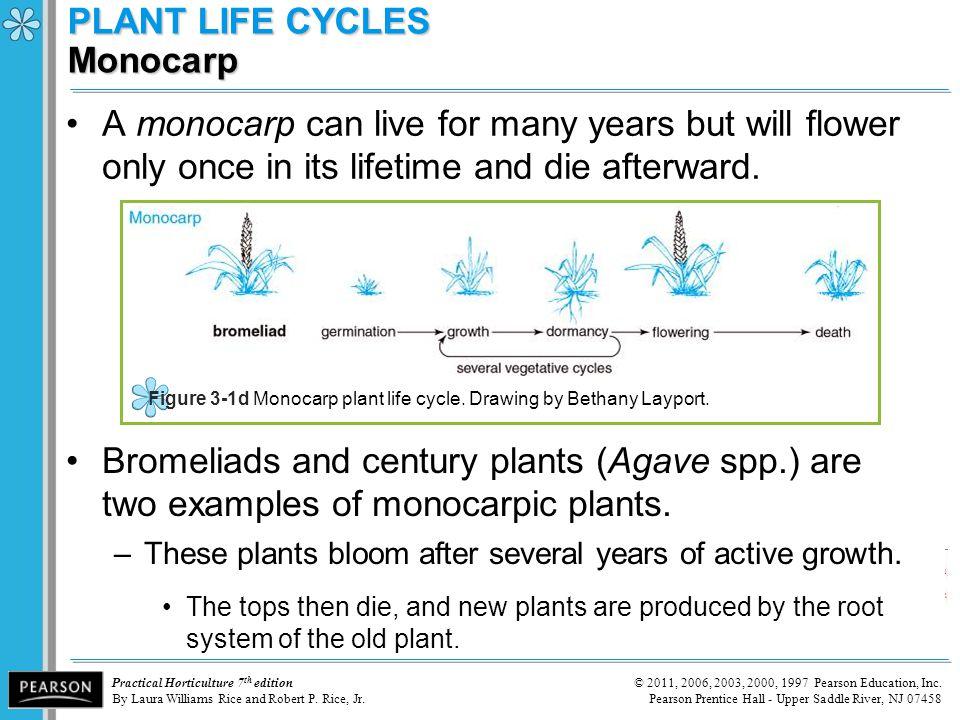 PLANT LIFE CYCLES Monocarp