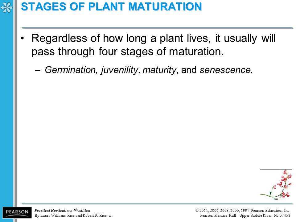 STAGES OF PLANT MATURATION