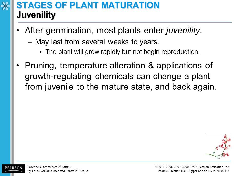 STAGES OF PLANT MATURATION Juvenility