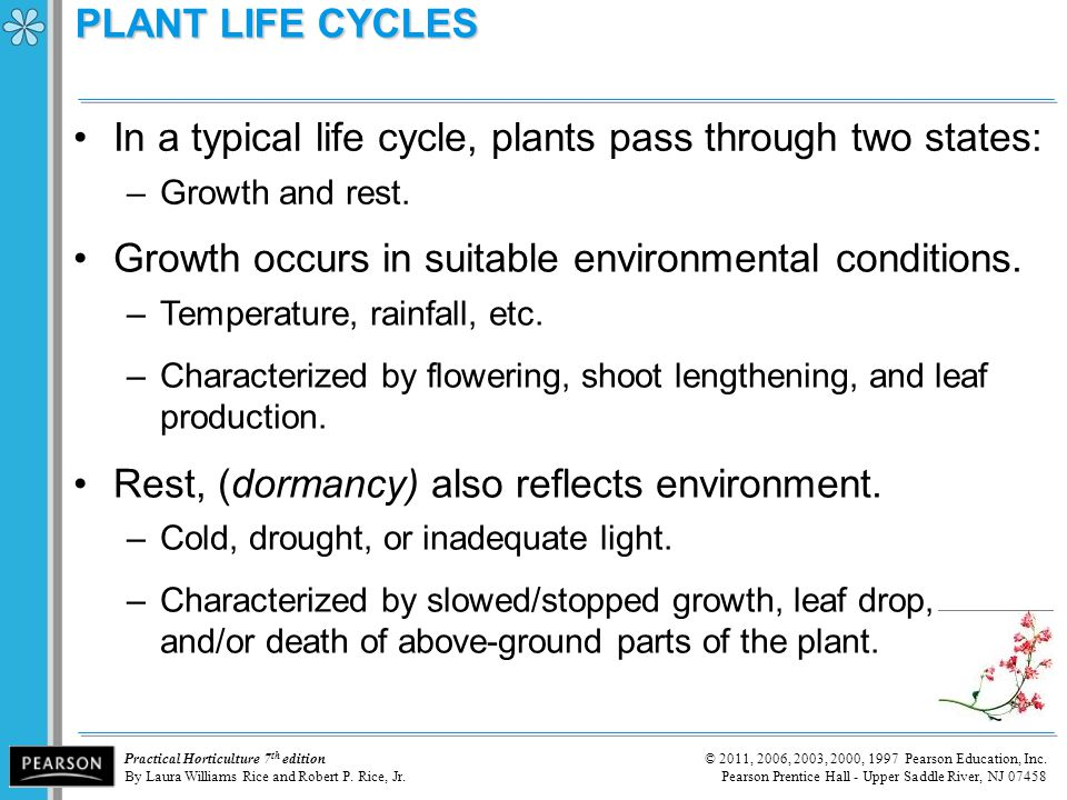 In a typical life cycle, plants pass through two states: