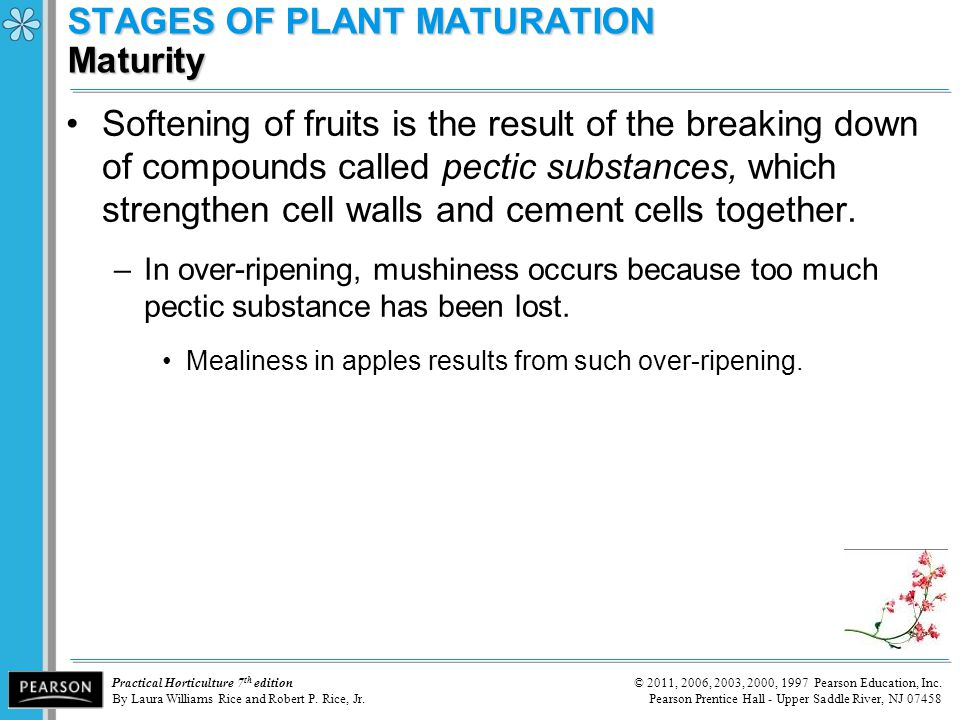 STAGES OF PLANT MATURATION Maturity