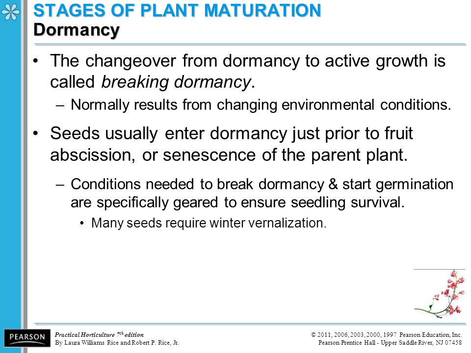 STAGES OF PLANT MATURATION Dormancy