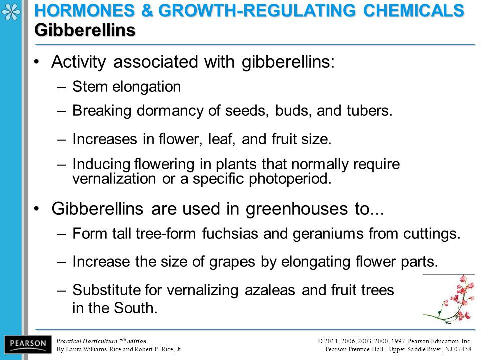 HORMONES & GROWTH-REGULATING CHEMICALS Gibberellins