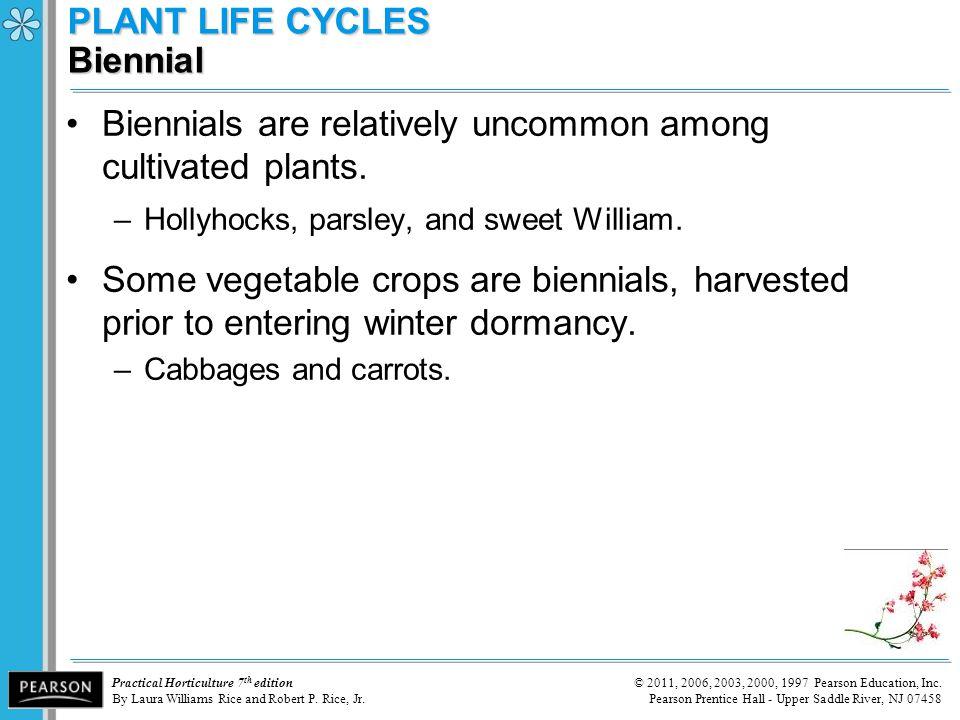 PLANT LIFE CYCLES Biennial