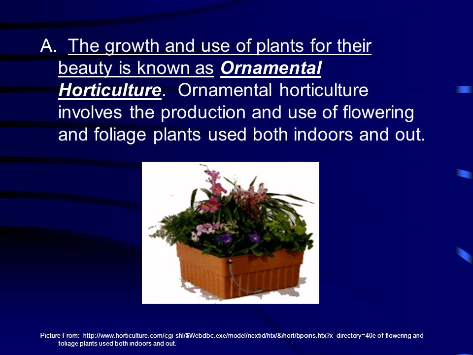 A. The growth and use of plants for their beauty is known as Ornamental Horticulture. Ornamental horticulture involves the production and use of flowering and foliage plants used both indoors and out.