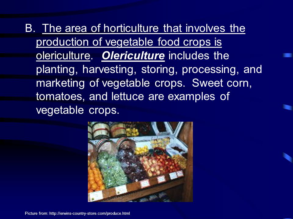 B. The area of horticulture that involves the production of vegetable food crops is olericulture. Olericulture includes the planting, harvesting, storing, processing, and marketing of vegetable crops. Sweet corn, tomatoes, and lettuce are examples of vegetable crops.