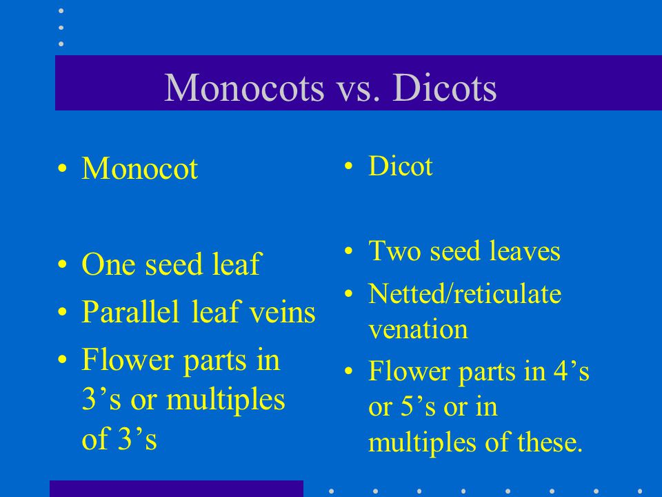 Monocots vs. Dicots Monocot One seed leaf Parallel leaf veins