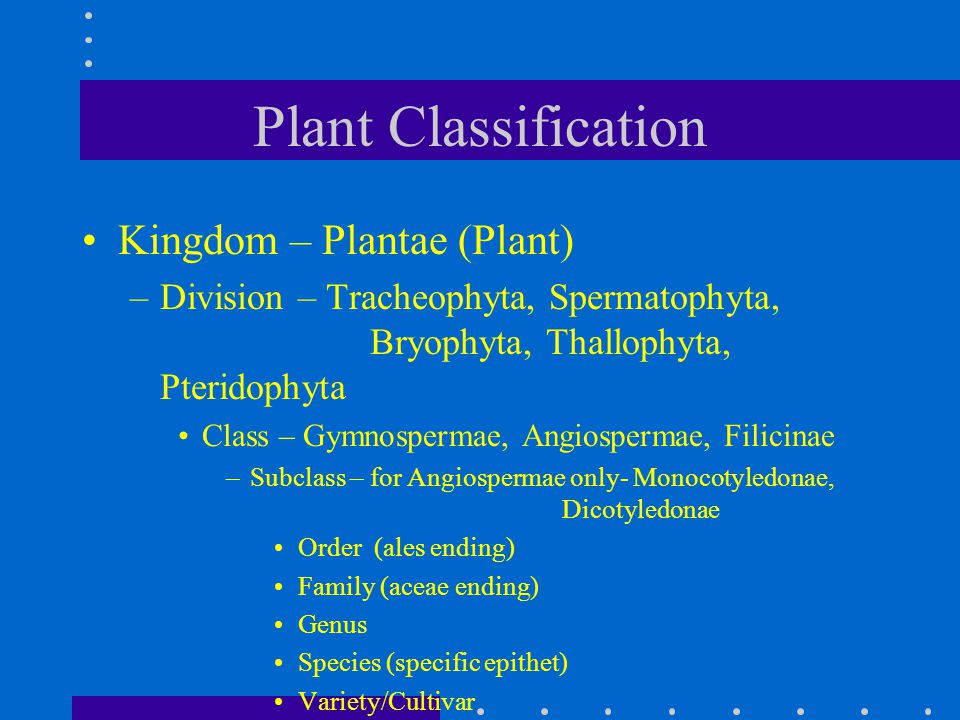 Plant Classification Kingdom – Plantae (Plant)