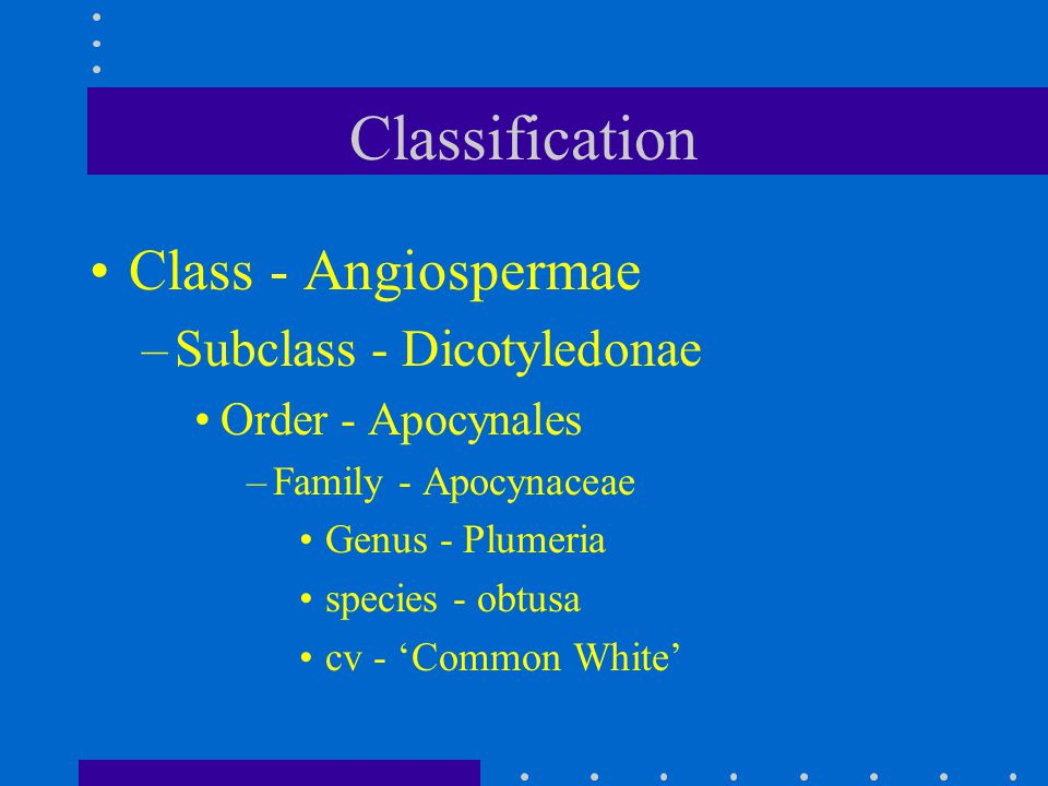 Classification Class - Angiospermae Subclass - Dicotyledonae