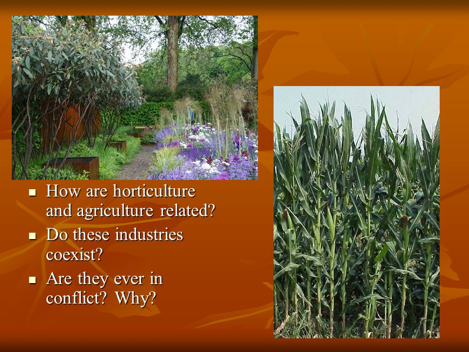 How are horticulture and agriculture related