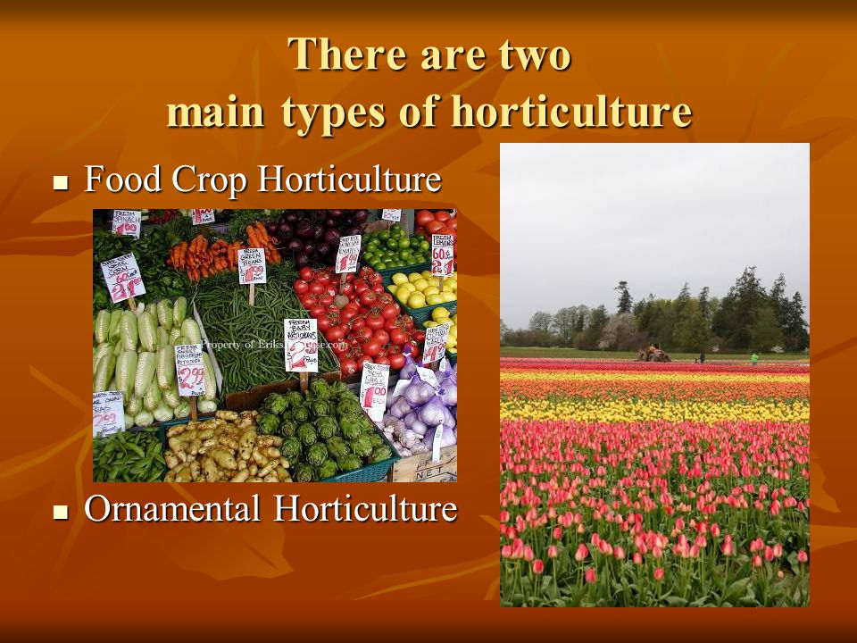 There are two main types of horticulture