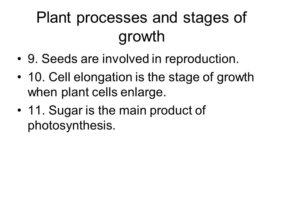 Plant processes and stages of growth