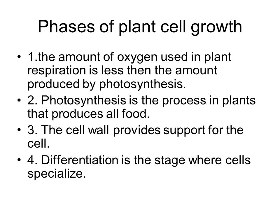 Phases of plant cell growth