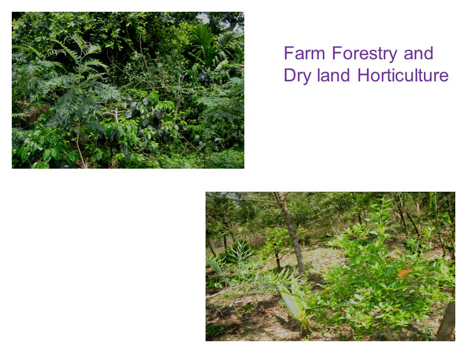 Farm Forestry and Dry land Horticulture