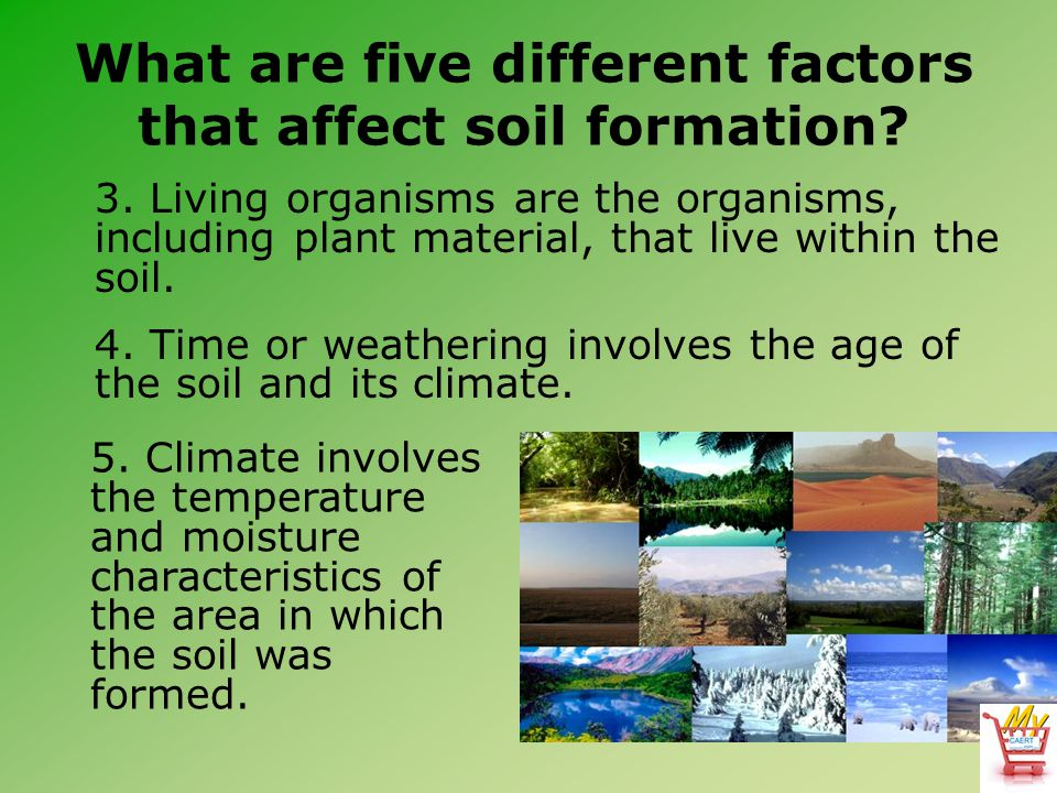 What are five different factors that affect soil formation