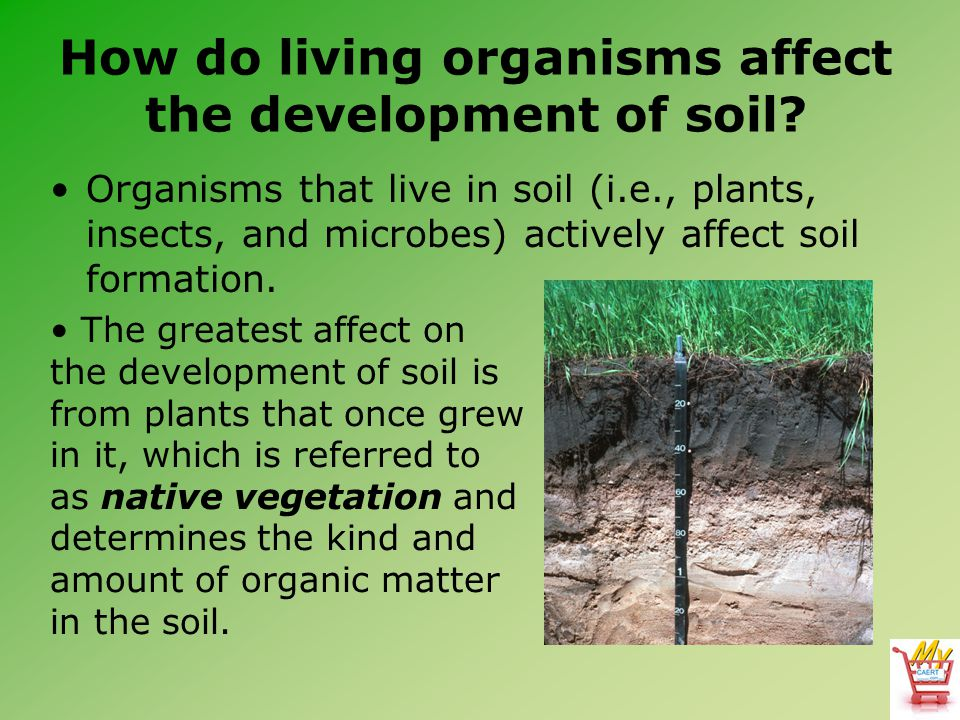 Horticulture science lesson 23 understanding soil for Is soil living