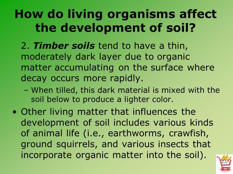 How do living organisms affect the development of soil