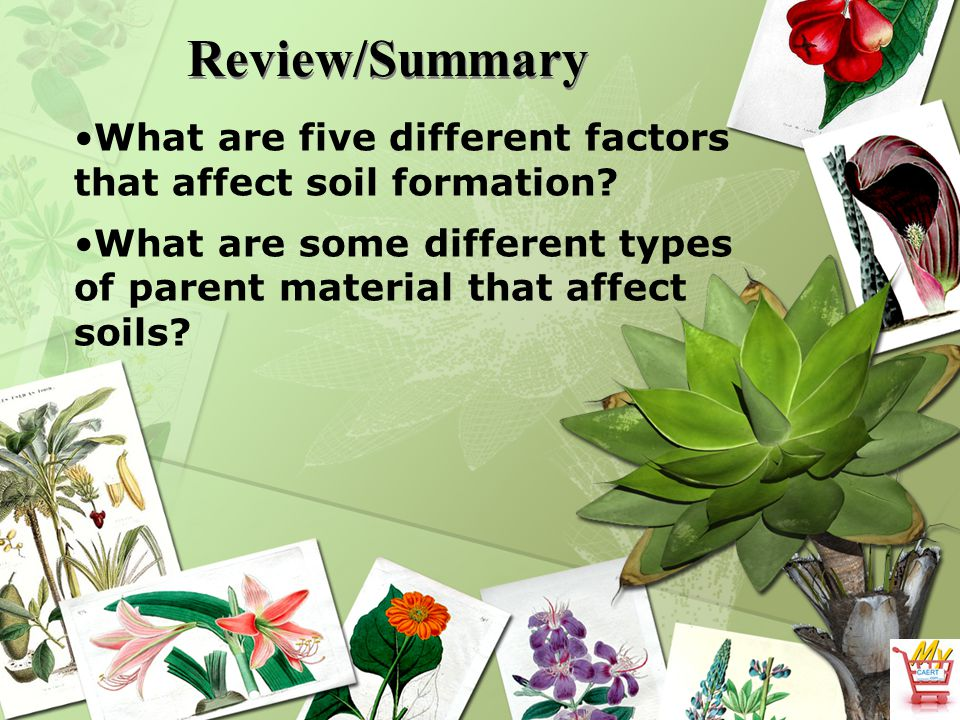 Review/Summary What are five different factors that affect soil formation What are some different types of parent material that affect.