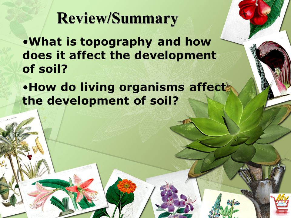 Review/Summary What is topography and how does it affect the development of soil.