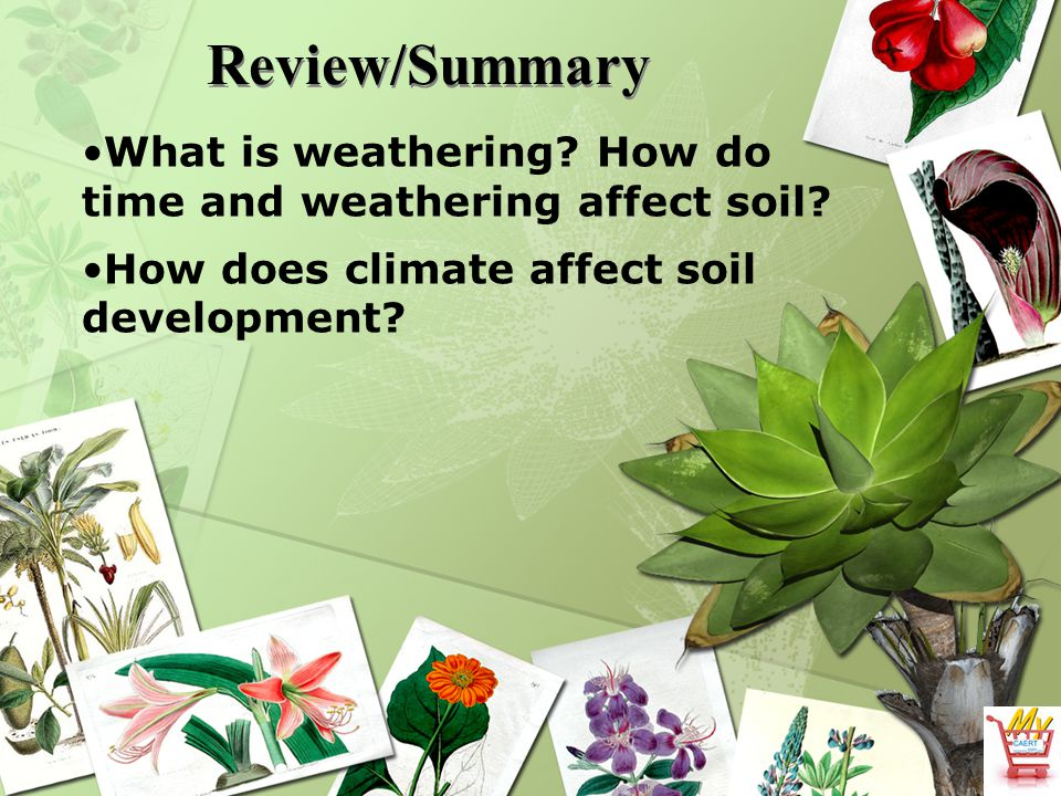 Review/Summary What is weathering. How do time and weathering affect soil.