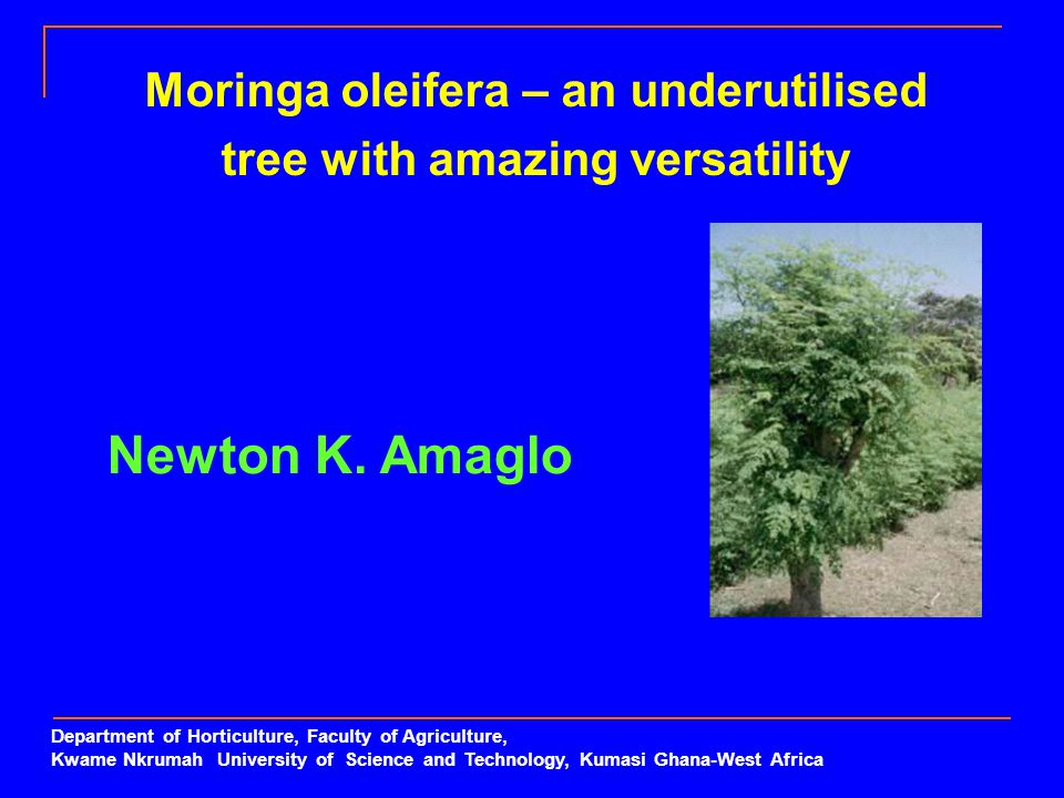 Moringa oleifera – an underutilised tree with amazing versatility