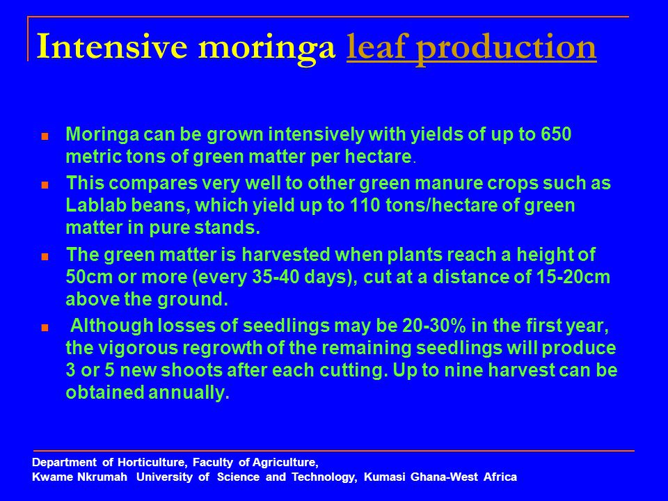 Intensive moringa leaf production