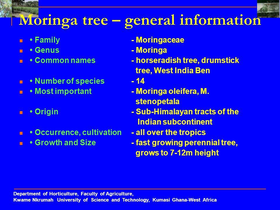 Moringa tree – general information