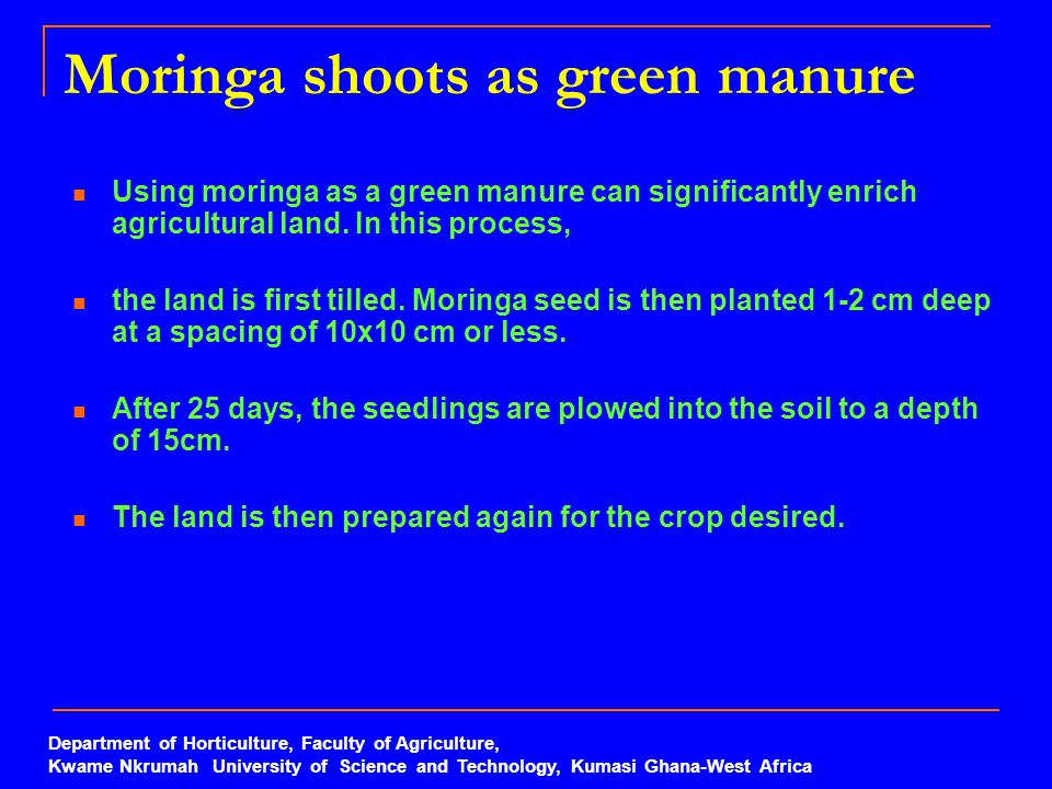 Moringa shoots as green manure