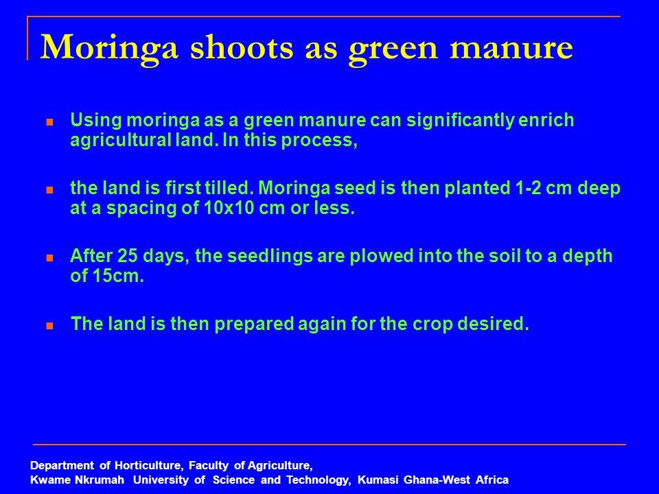 Moringa shoots as green manure