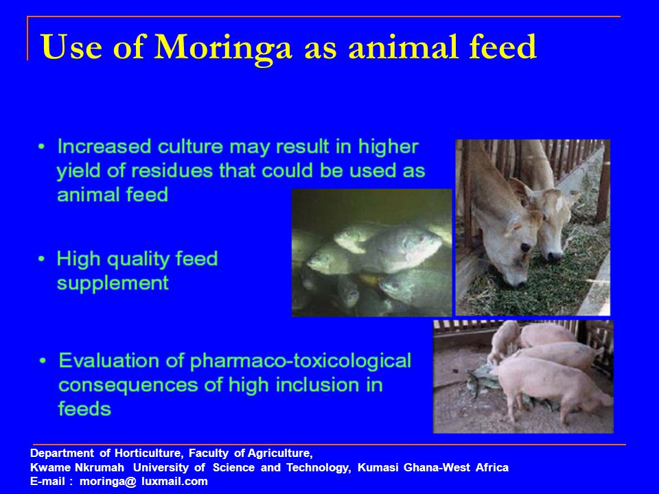Use of Moringa as animal feed