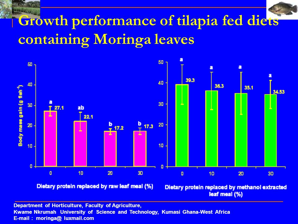 Growth performance of tilapia fed diets containing Moringa leaves
