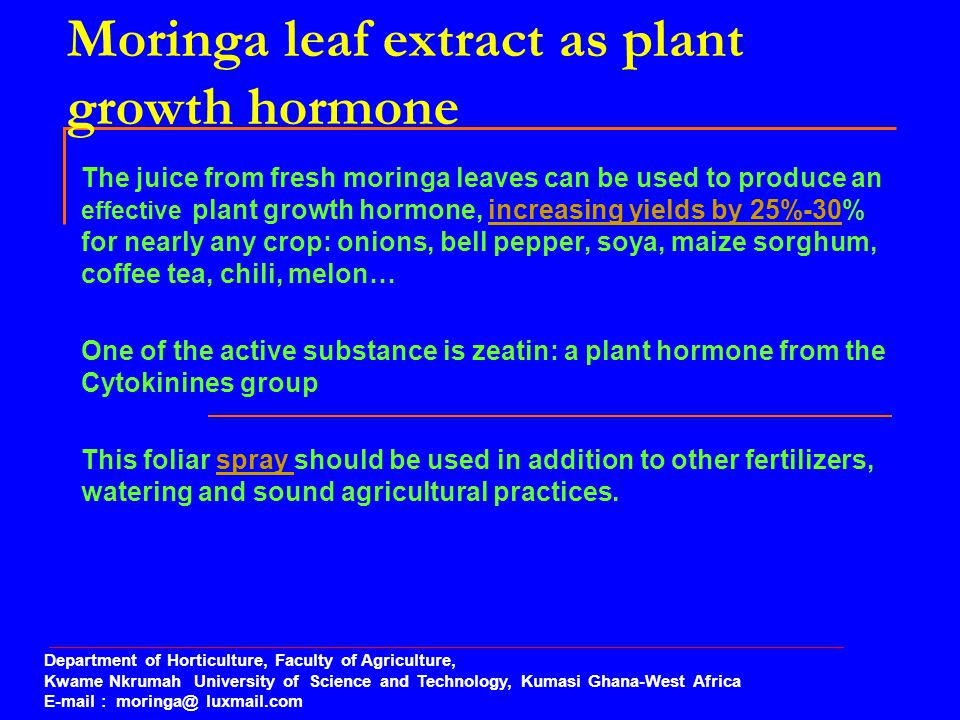 Moringa leaf extract as plant growth hormone