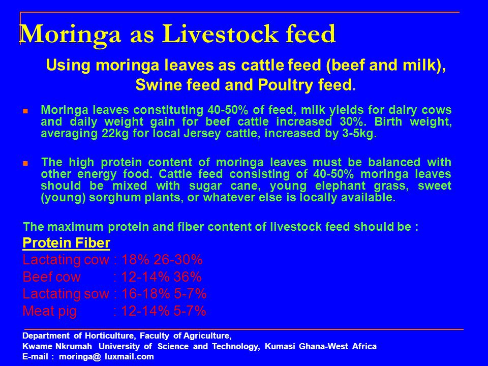 Moringa as Livestock feed