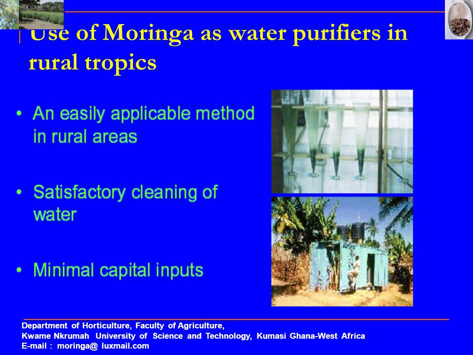 Use of Moringa as water purifiers in rural tropics