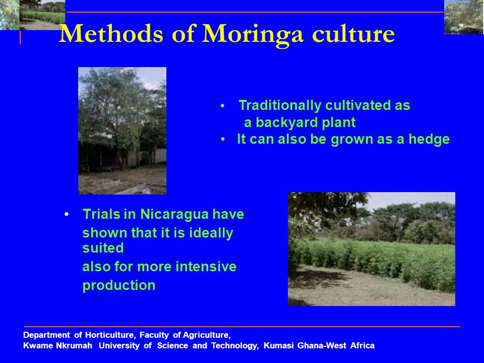 Methods of Moringa culture