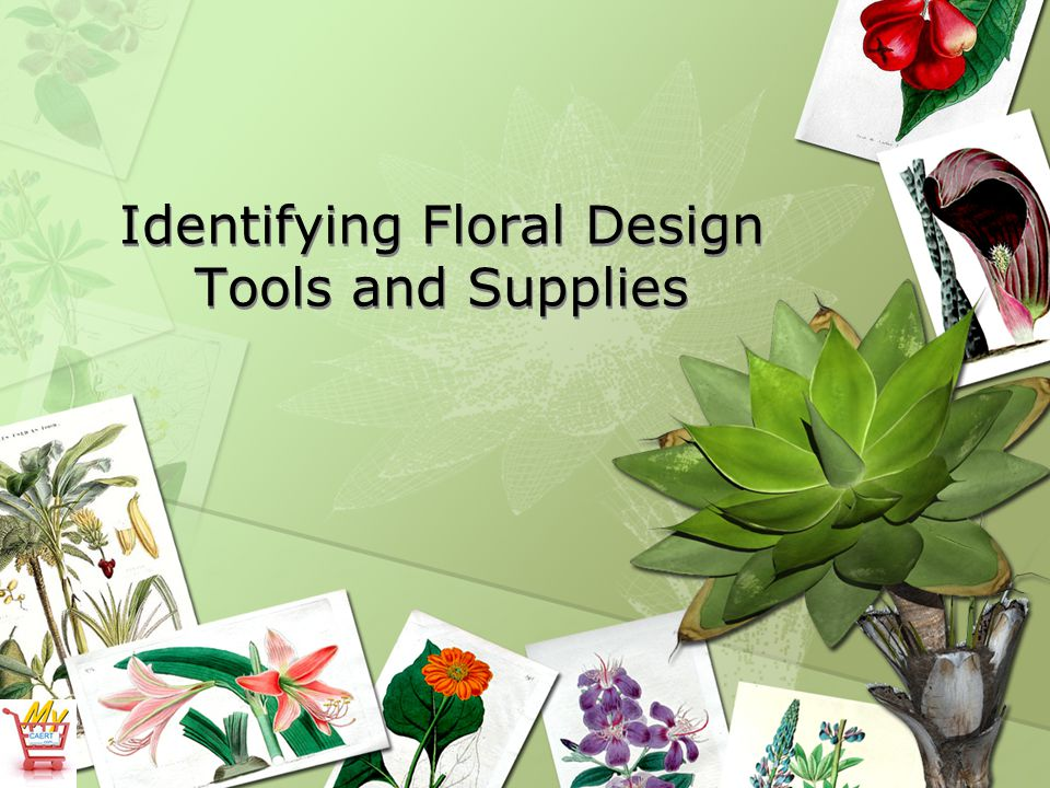 Identifying Floral Design Tools and Supplies