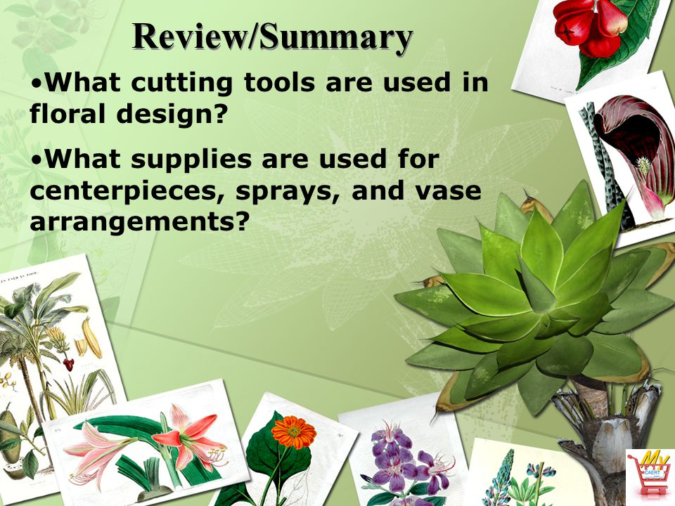 Review/Summary What cutting tools are used in floral design