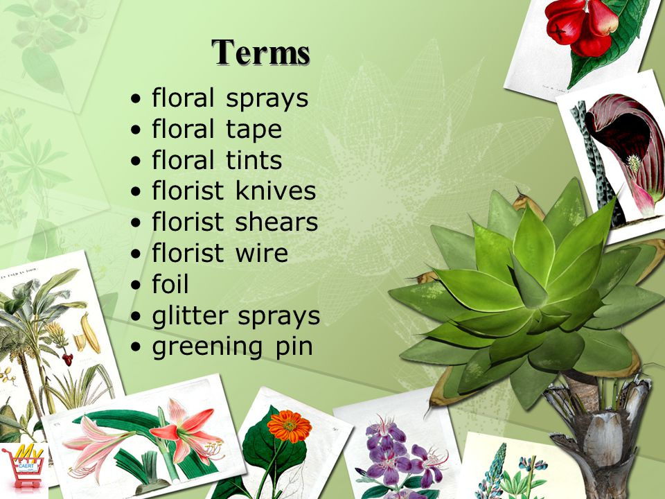 Terms floral sprays floral tape floral tints florist knives