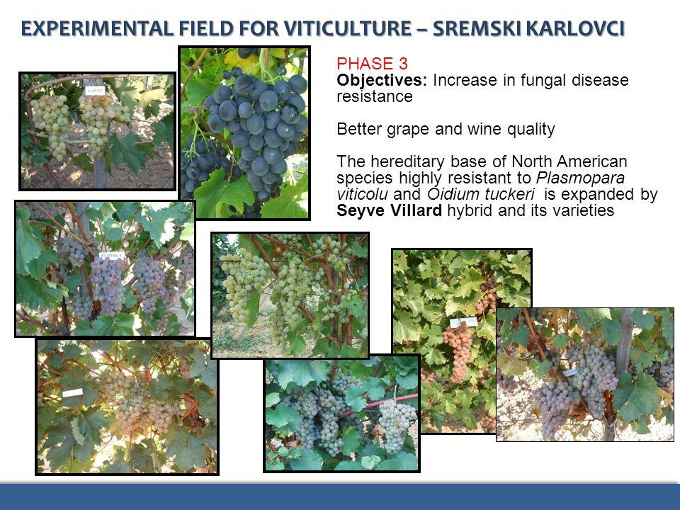 EXPERIMENTAL FIELD FOR VITICULTURE – SREMSKI KARLOVCI