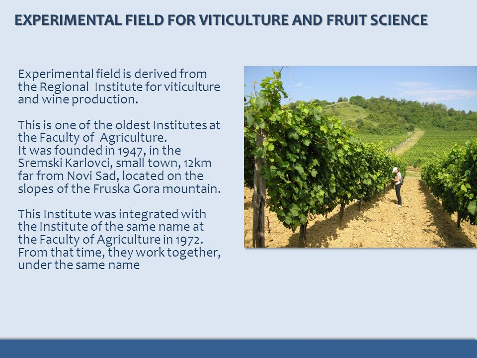 EXPERIMENTAL FIELD FOR VITICULTURE AND FRUIT SCIENCE