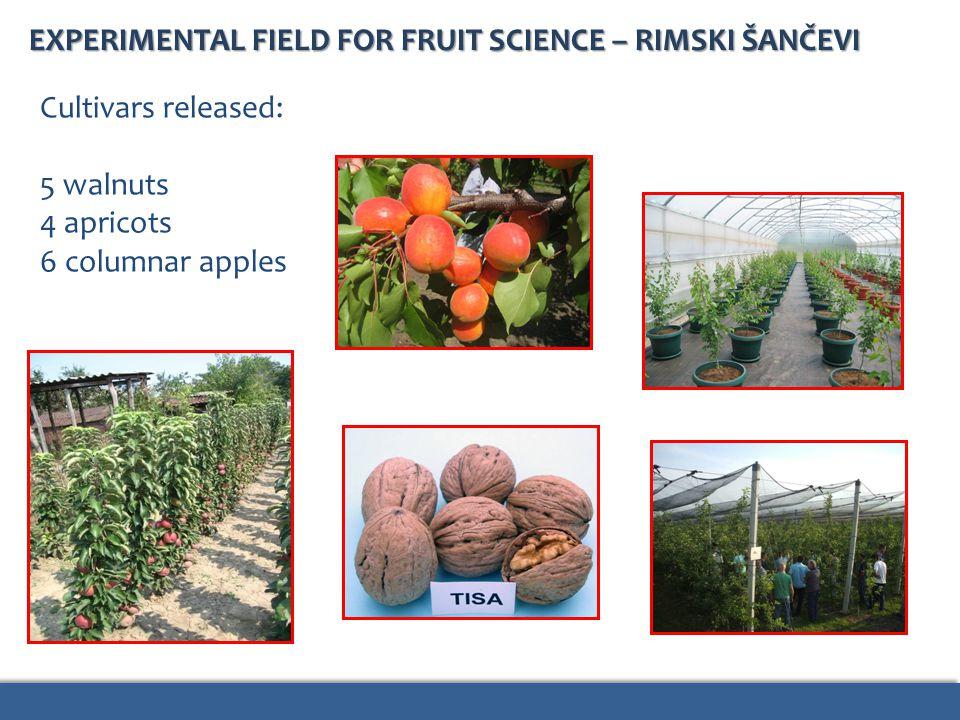EXPERIMENTAL FIELD FOR FRUIT SCIENCE – RIMSKI ŠANČEVI