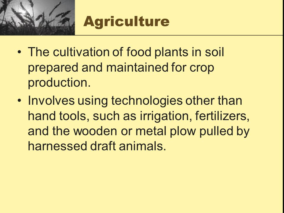 Agriculture The cultivation of food plants in soil prepared and maintained for crop production.