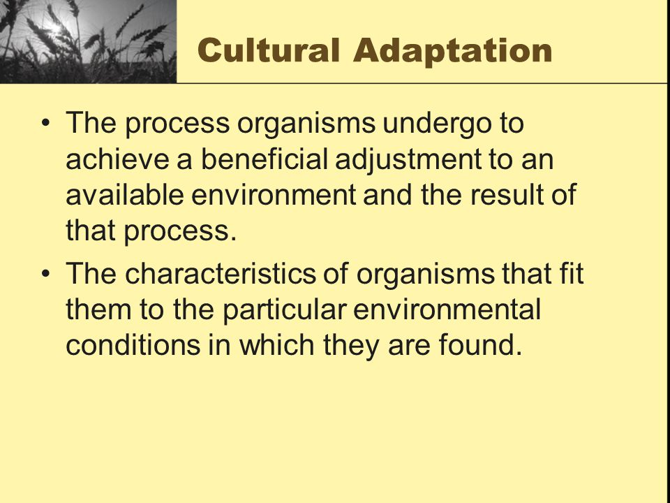 Cultural Adaptation The process organisms undergo to achieve a beneficial adjustment to an available environment and the result of that process.