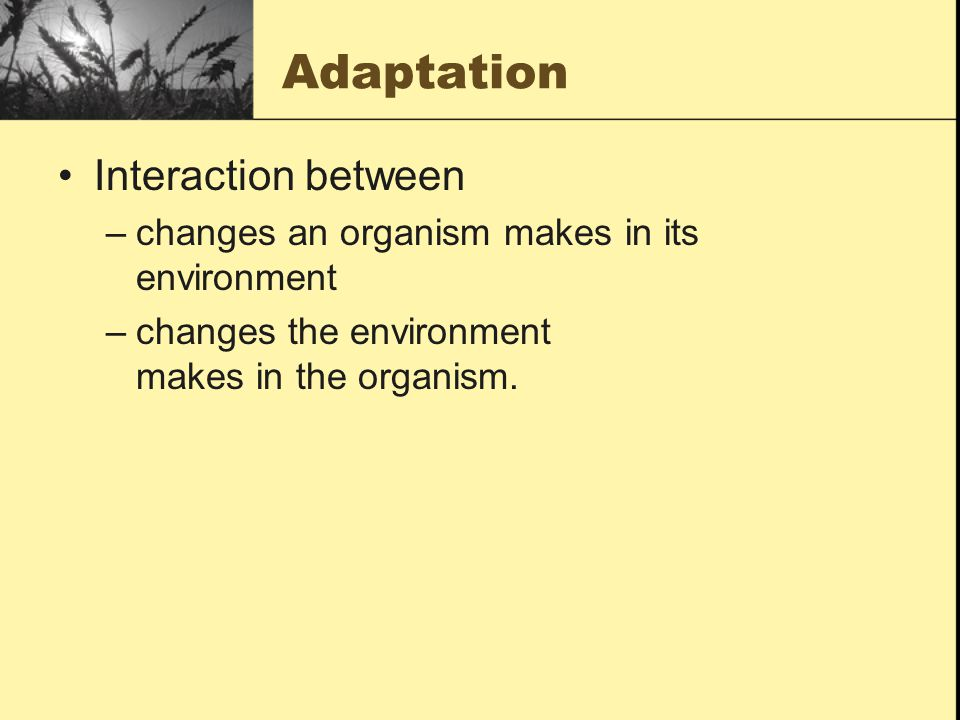Adaptation Interaction between
