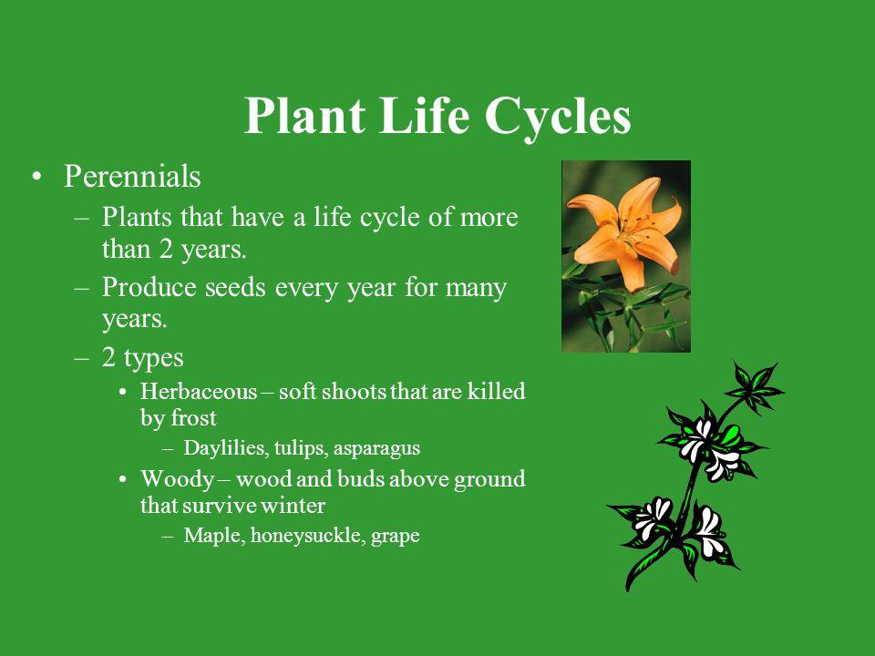 Plant Life Cycles Perennials